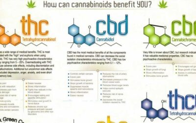 Cannabinoid Education Infographic F